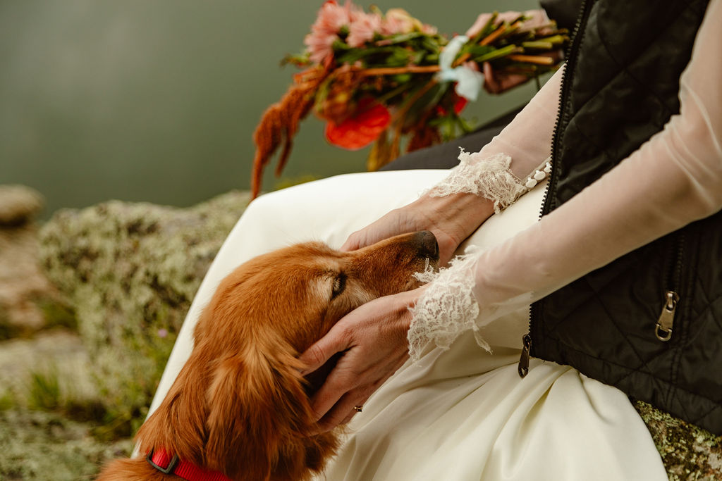 a dog is being petted by her owner who is wearing a wedding dress