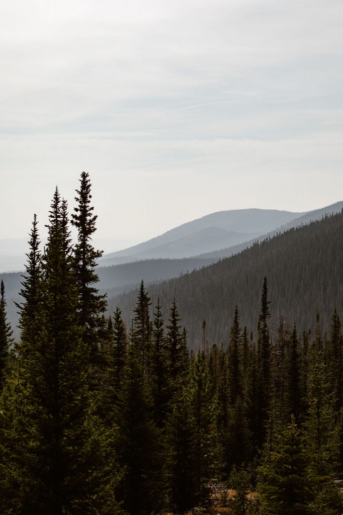 a photo of tall evergreen trees and mountain views in the background taken from rocky mountain national park, colordao