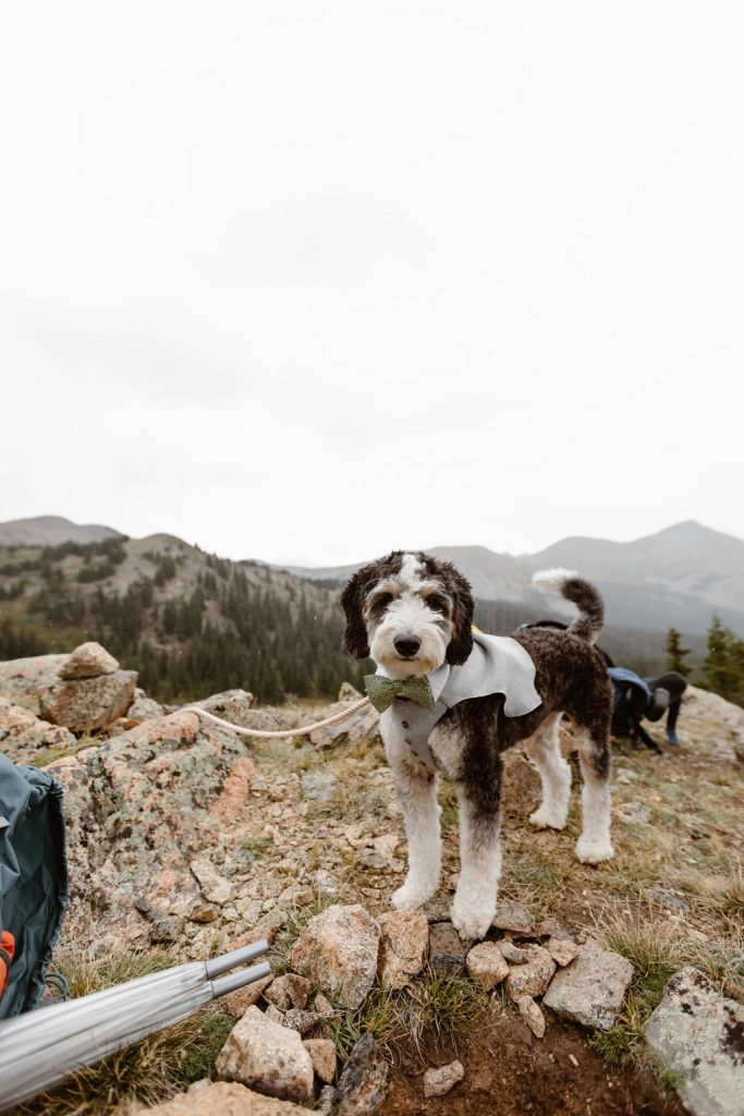 a really cute grey and white dog dressed in a dog suit on top of a mountain