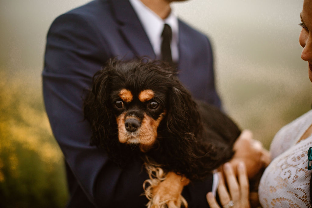 a close up of a small black and brown puppy being held by it's owners