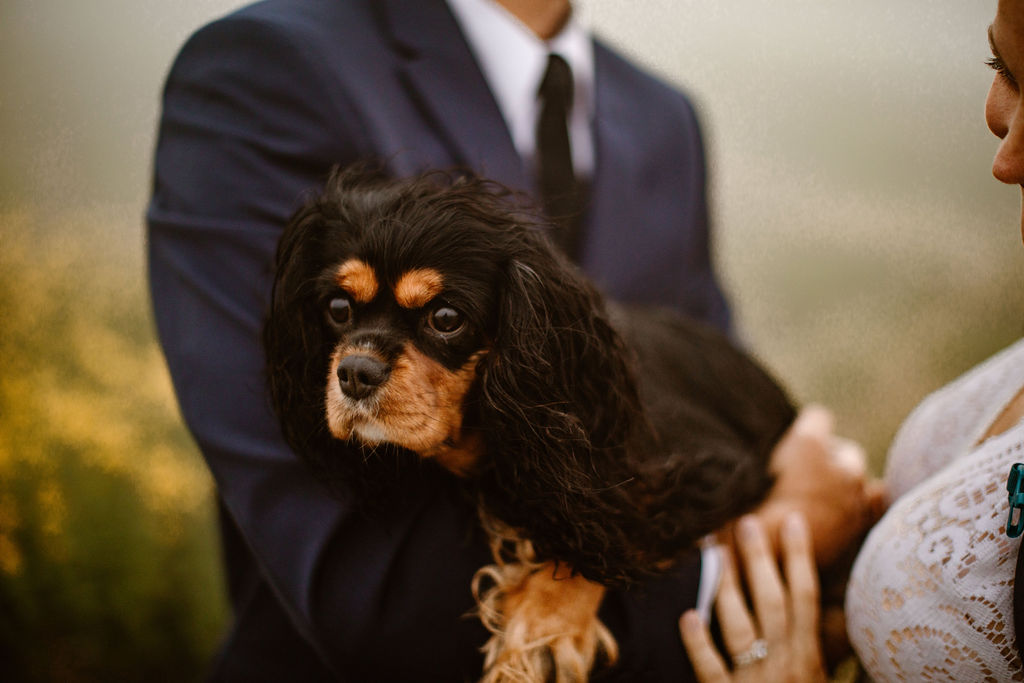 a bride and groom holding their small black and brown dog