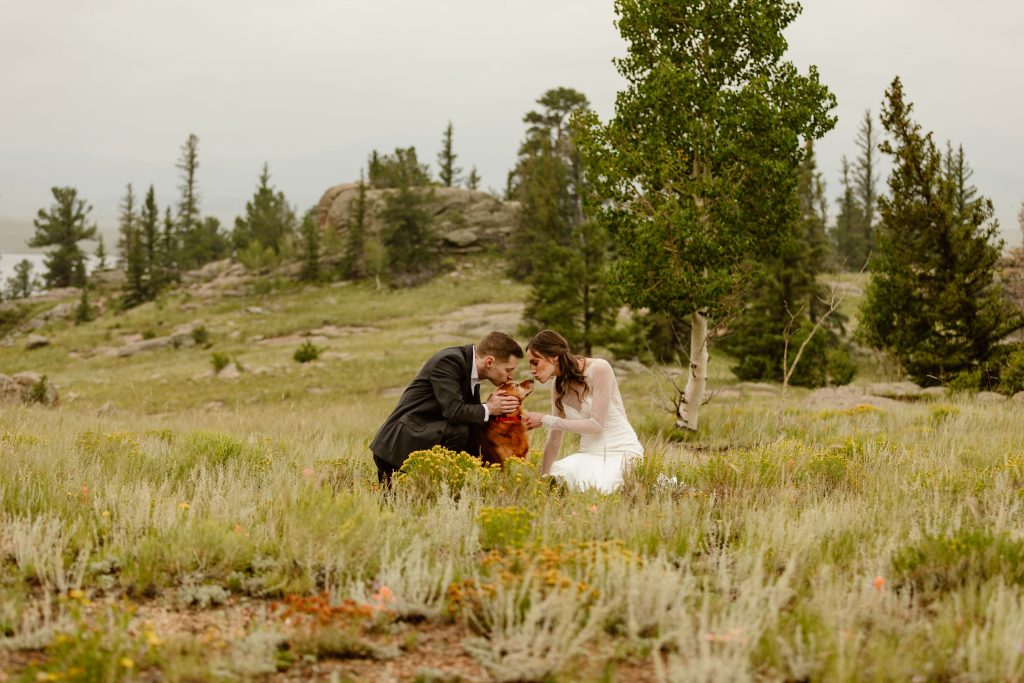 a bride and groom kissing their golden retriever dog in the middle of a grassy field